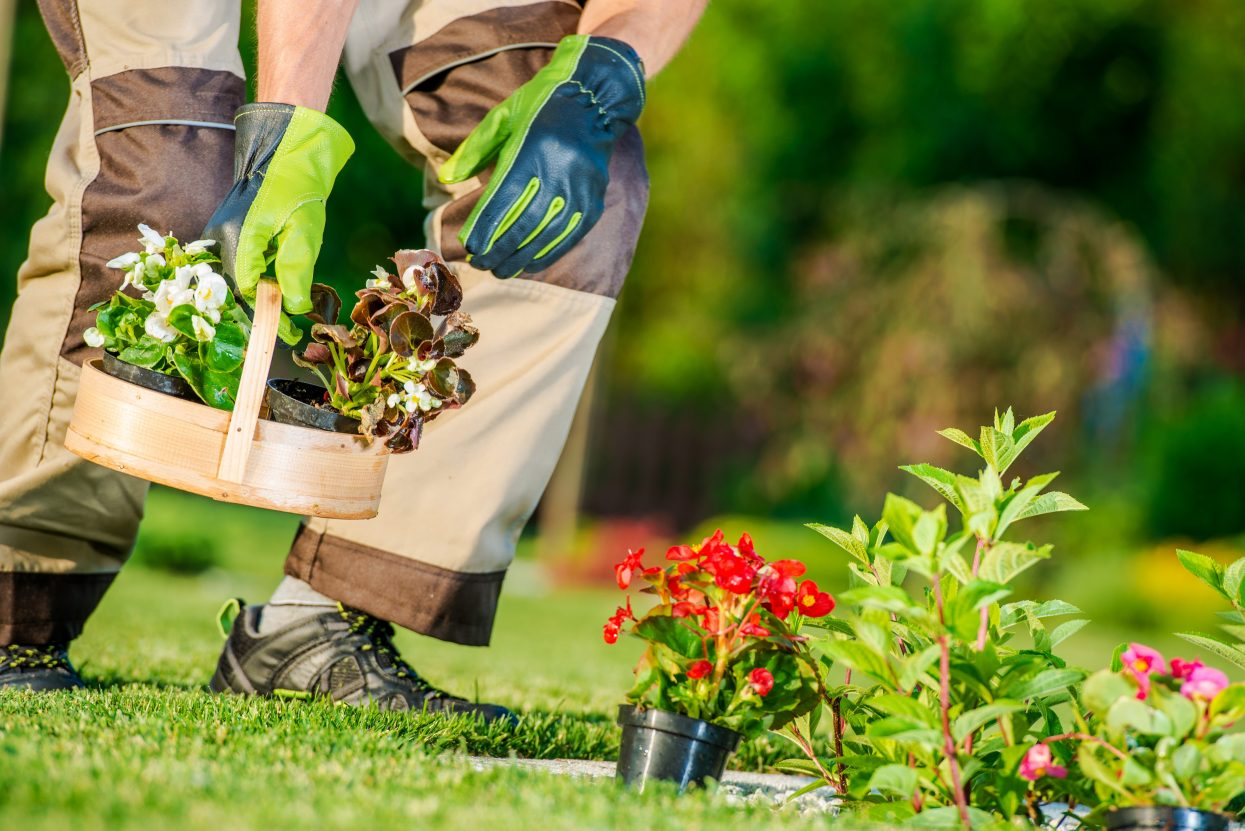 Landscaping with a Septic System