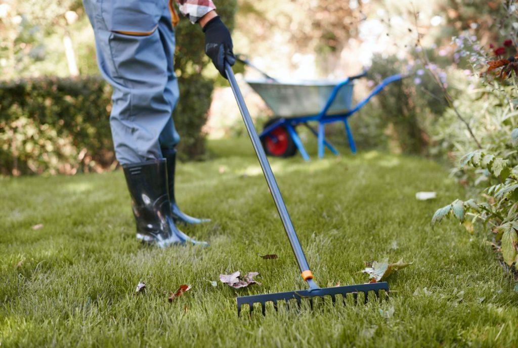 Person raking up yard debris around the septic system